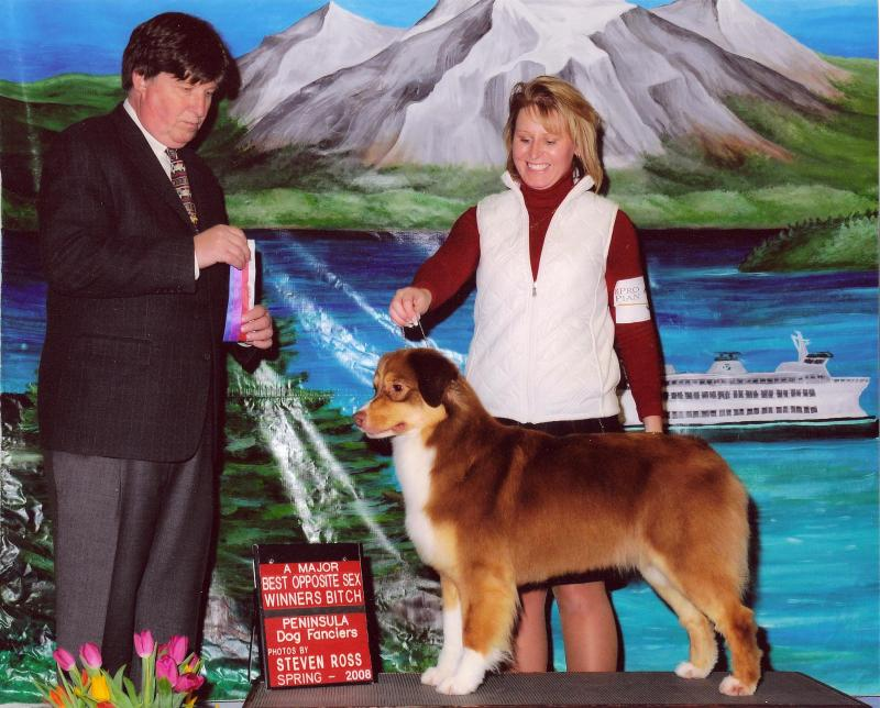KAHLUA - AKC CHAMPION BITCH